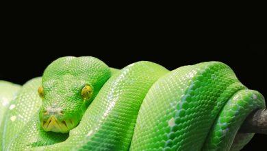 warming snake during travel