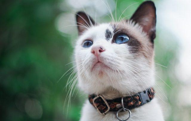 cat passport thailand