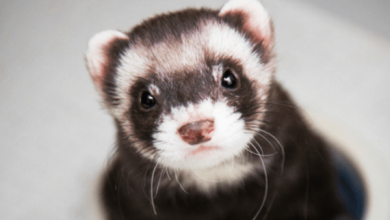 Photo of 7 BEST Airline Approved CABIN-Friendly Ferret Carriers [2019]