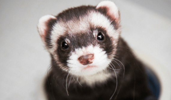 best airline approved ferret carriers