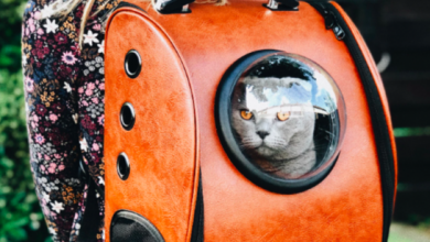 Photo of 7 BEST Airline Approved CABIN-Friendly Cat Carriers [2019]