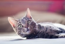 Photo of How to take a Cat on The Eurotunnel [Guide, FAQ & Prices]