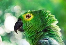 Photo of 7 Easy Ways to Keep a Bird or Parrot Calm While Travelling