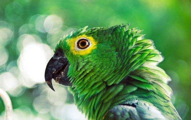 keeping bird parrot calm travel