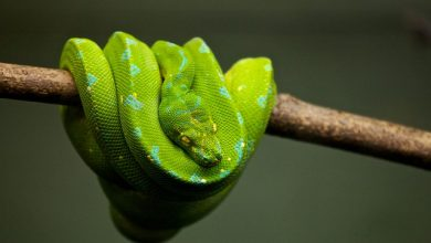 Photo of 6 Easy Ways to Keep a Snake Calm While Travelling