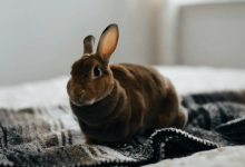 Photo of Can I Take My Rabbit on a Plane? [Yes! Here's How]