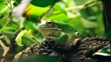 Photo of 9 Easy Ways to Keep an Exotic Frog Warm During Travel
