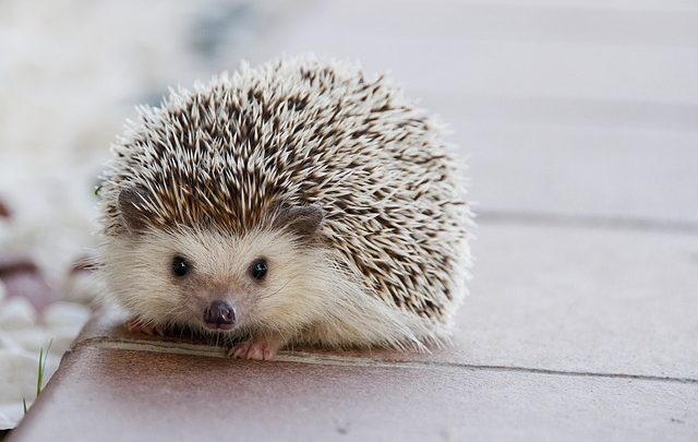warming hedgehog while travelling