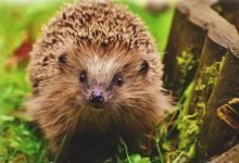 Photo of Can I Take my Hedgehog Outside to Play? [Yes! Here's how]