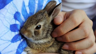 Photo of 8 Easy Ways to Keep a Rabbit Calm While Travelling