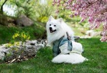 Photo of Bringing Pets to Japan [Pet Passport 2021 Guide]