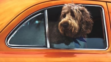 laws for dogs in cars