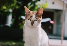 Photo of Importing Cats to Australia [2021 Fees, Requirements & Processes]
